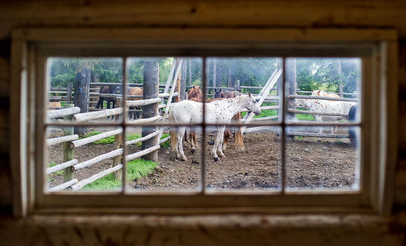"<h2>Horse in Window</h2> <br/>I can never decide if I enjoy naming photos or not! <br/><br/>I think I enjoy it when I come up with a good name, and I don't like when I come up with a boring name.  Let's take this one for example:  ""Horse in Window.""  I mean, how uncreative can I be?  What's wrong with me?<br/><br/>When I am editing photos, and the muse visits, I am like a man possessed.  I can rip through a bunch of photos and make some nice little creations.  But then I click ""Save As..."", and I just blank out on a name.  I think the creative part of my brain for making photos is different than the part for naming things.<br/><br/>I do enjoy writing, and I often find that the words flow easily.  This bit of me seems disconnected from the photo-editing bit, though.<br/><br/>There is a small slice of solace, I think, in considering the names of some of the great paintings from my impressionist heroes.  They have names like ""Girl in Field"" and ""Sun on Water"".  Not too exciting, but they do stand the test of time.  But ""Horse in Window""?  I think not!<br/><br/> - Trey Ratcliff <br/><br/>Read more <a href=""http://www.stuckincustoms.com/2010/11/14/horse-in-window/"">here</a> at Trey Ratcliff's travel photography blog, Stuck in Customs."