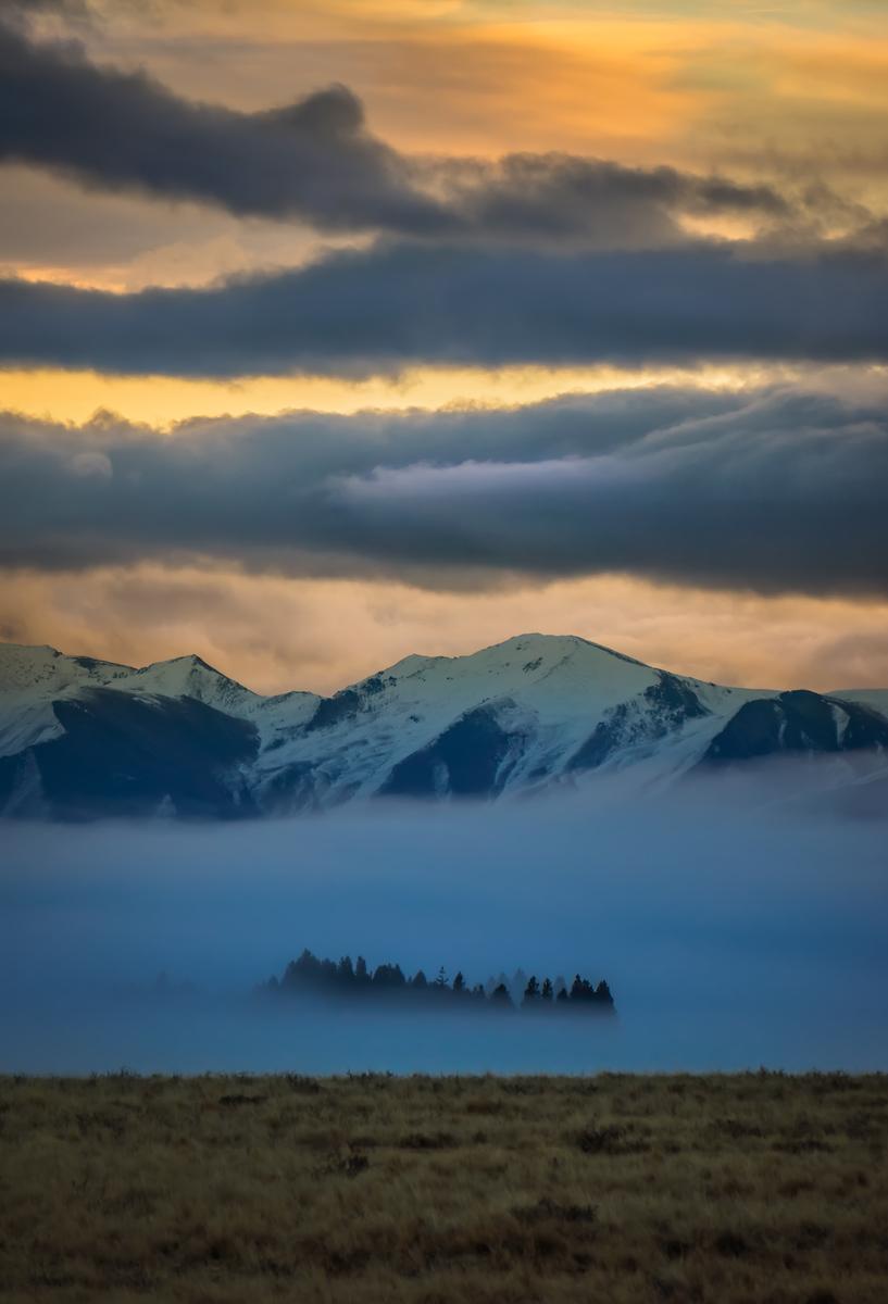 The Trees Peak Through The Fog
