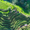 Rice Fields In Bali From Above