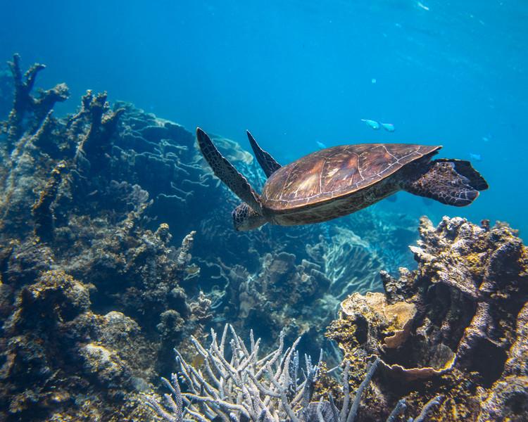 Turtle Jump Dive