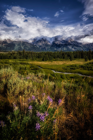 Wildflower Season in Grand Teton National Park