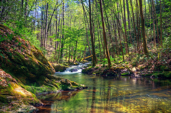 'Kissed By The Sun' ~ Great Smoky Mountains National Park, TN