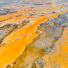 Orange Bacterial Streams