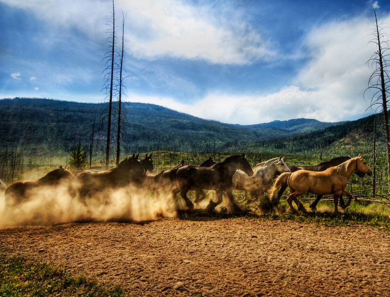 """<h2>Stampede of the Wild Horses</h2> <br/>After a long hike through the mountains of Yellowstone, I came across over 40 horses sprinting from one meadow to the next.  I stepped behind a tree to get out of the way and shot this one.<br/><br/>- Trey Ratcliff<br/><br/><a href=""""http://www.stuckincustoms.com/2007/07/06/stampede-of-the-wild-horses/"""" rel=""""nofollow"""">Click here to read the rest of this post at the Stuck in Customs blog.</a>"""