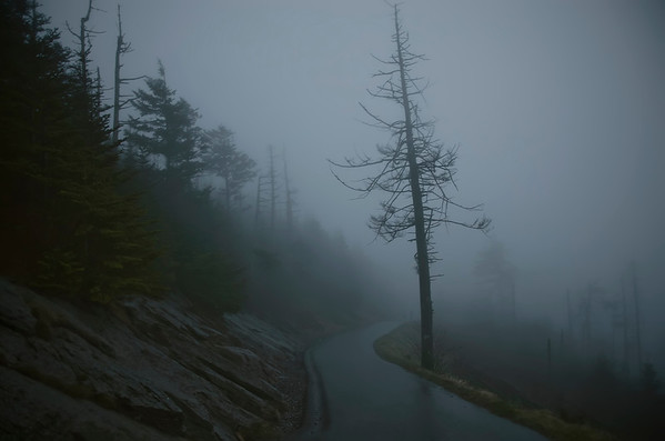 'Clingmans Trail' ~ Great Smoky Mountains National Park, TN