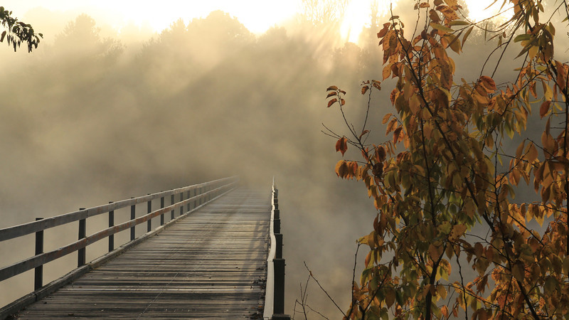 An old wooden bridge disappears into the fog, Canberra