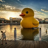 "<h2>Rubber Duck by Florentijn Hofman</h2> <br/>I think it is a wonderful surreal work of art! Then again, I'm a huge fan of David Lynch and Twin Peaks. Anything surreal in my parallel universe gets a big thumbs up…<br/><br/>- Trey Ratcliff<br/><br/><a href=""http://www.stuckincustoms.com/2013/01/24/im-not-a-reader-sydney-morning-herald/"" rel=""nofollow"">Click here to read the rest of this post at the Stuck in Customs blog.</a><br/><br/>Artist: <a href=""http://www.florentijnhofman.nl/dev/"" rel=""nofollow"">Florentijn Hofman</a>"
