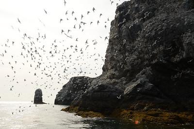 Scattering Sea Gulls