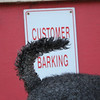 'Customer Barking' - One of my favourite pets in the world 'Rose' in front of a pet store in Sydney, Australia