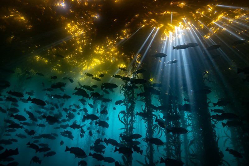 Cathedral of Kelp