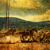 "<h2>The Old Wild Stampede</h2> <br/>These horses  came thundering onto the scene while I was walking down the road.  I got myself behind a tree so I would not get trampled like Mufasa.  I was lucky that they started kicking up dust in the right position relative to the sun so that their legs cast shadows through the cloud.  I can't take credit for that one!<br/><br/>- Trey Ratcliff<br/><br/><a href=""http://www.stuckincustoms.com/2009/08/22/the-old-wild-stampede/"" rel=""nofollow"">Click here to read the rest of this post at the Stuck in Customs blog.</a>"