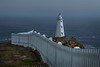 Lights On At Cape Spear (#0554)