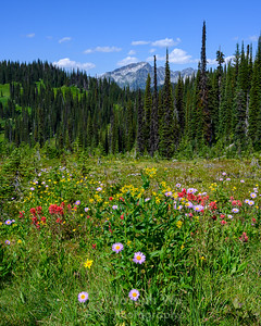 Summer Wildflowers at Mount Revelstoke