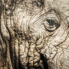 Into the eye of the Elephant | South Africa