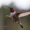 His Majesty Hummingbird