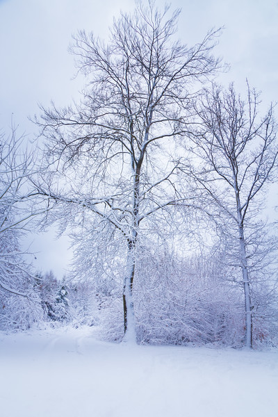 The Winter Tree