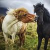 Horses Aloof