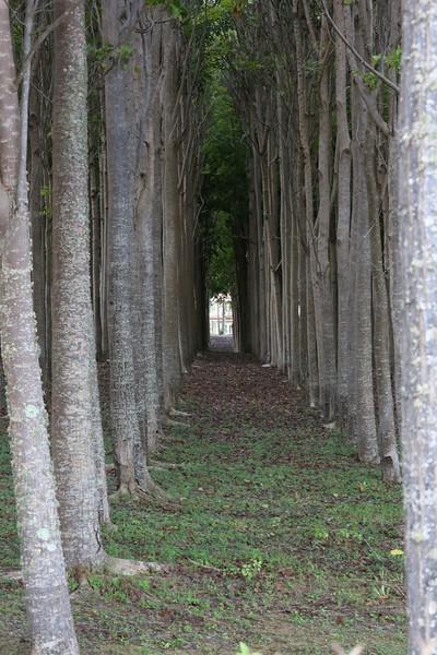 mahogany alley