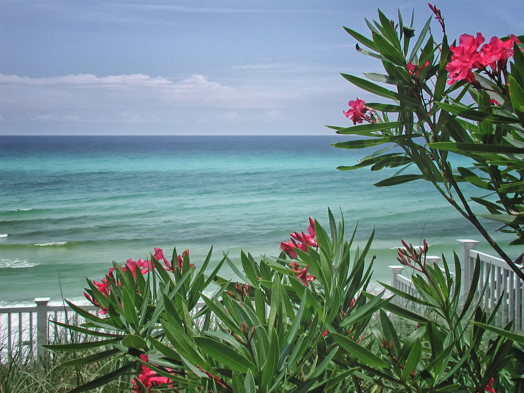Gulf breeze taken by nature photographer Jerry Dalrymple near Destin, FL