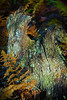 Alight with Lichen