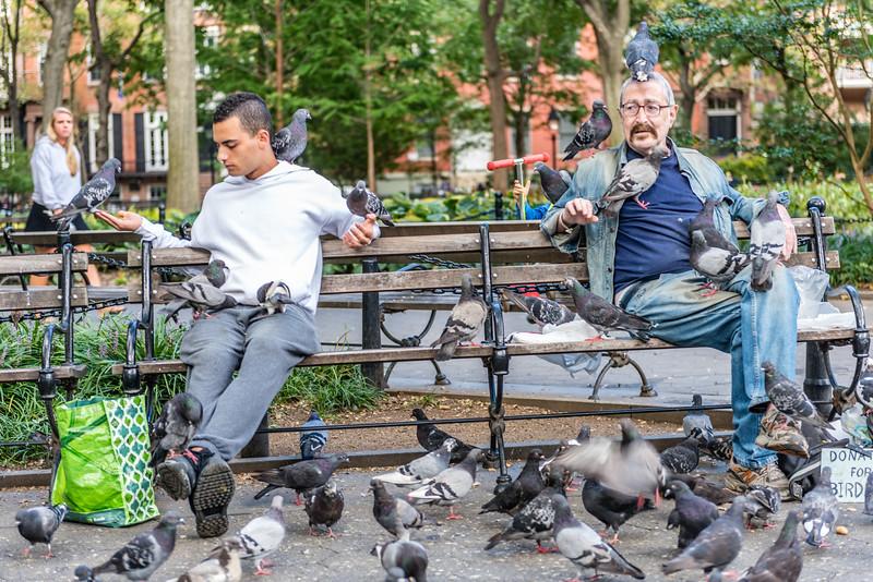 Pigeon Haven