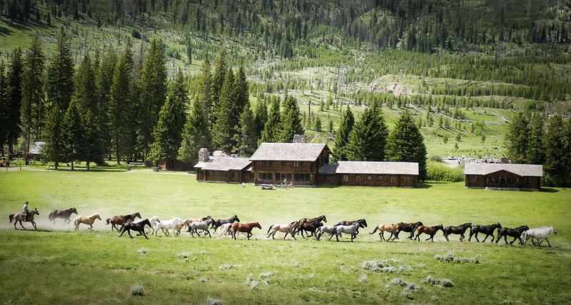 """<h2>Running Wild, Across the Meadow</h2> <br/>I was just returning from one little adventure and then I stumbled onto another one! <br/><br/>Every day, about this time, a few dozen horses from the ranch run free across the meadow to graze in distant pastures.  They stay cooped up inside the corral for most of the day, so they love the chance to run free.  The cowboy rides behind them, cracking his whip.  It echoes through the valley and everything seems right in the world. <br/><br/> - Trey Ratcliff <br/><br/>Read the rest (and help me pick my new phone!) <a href=""""http://www.stuckincustoms.com/2010/07/21/wild-horses/"""">here</a>."""
