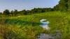 Texas_Pasture
