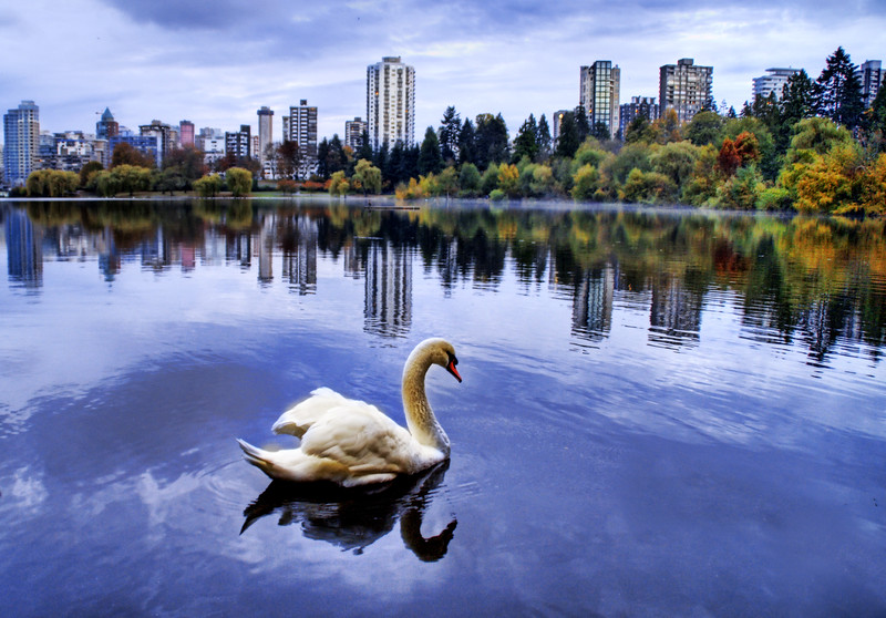 """<h2>Morning Mist at the Lagoon</h2> <br/>This was shot in Stanley Park in Vancouver one morning.  Vancouver always seems to be nice and cloudy, so the colorful trees around the park always stand out nicely.  There was a giant swan floating nearby while I was walking around, so I took this single RAW and converted to HDR so I could be sure to get all the little colors in the trees and the various shades in the sky and water.<br/><br/>- Trey Ratcliff<br/><br/><a href=""""http://www.stuckincustoms.com/2006/11/10/morning-mist-on-the-lagoon/"""" rel=""""nofollow"""">Click here to read the rest of this post at the Stuck in Customs blog.</a>"""