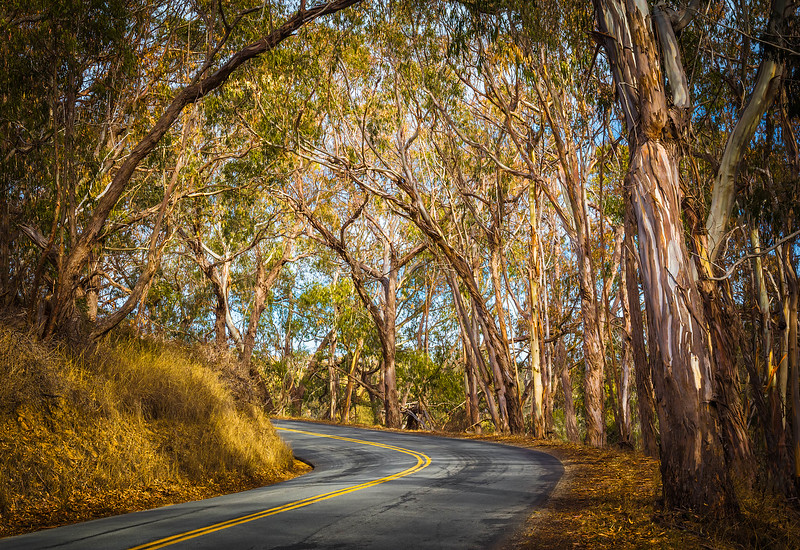 Travel_Photography_Blog_California_Pecho_Valley_Road