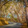 Travel_Photography_Blog_California_Pecho_Valley_Road