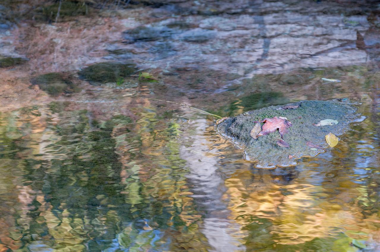 Monet's Leaf