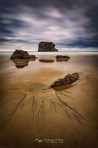 Roots of sand, Playa de la Ballota, Llanes, Asturias