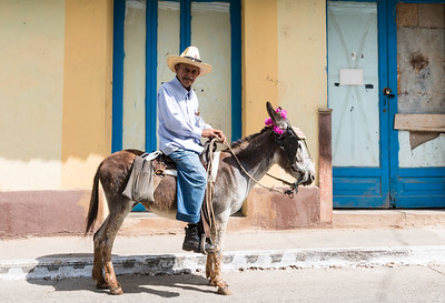 Old man on a donkey adorned with flowers, Trinidad