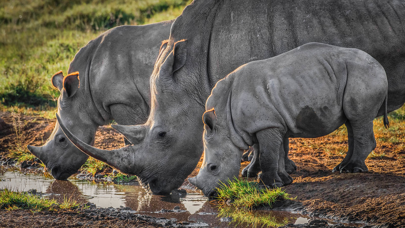 An early morning at the local watering hole   Kenya
