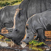 An early morning at the local watering hole | Kenya