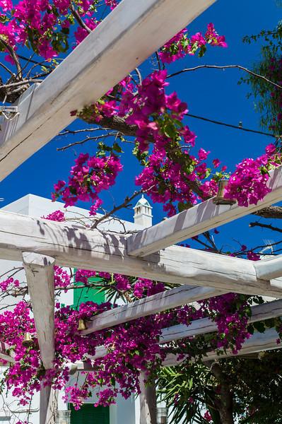 Blossom on Santorini
