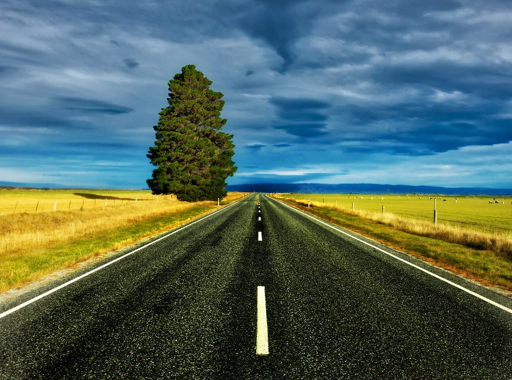 Driving To Dunedin