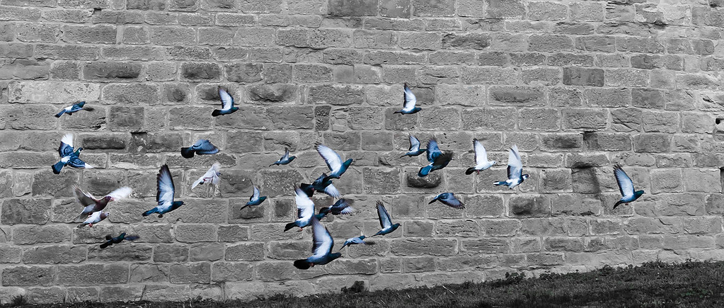 You might like Pigeons!