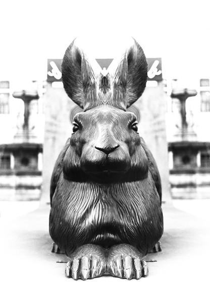 Black Rabbit of Vienna