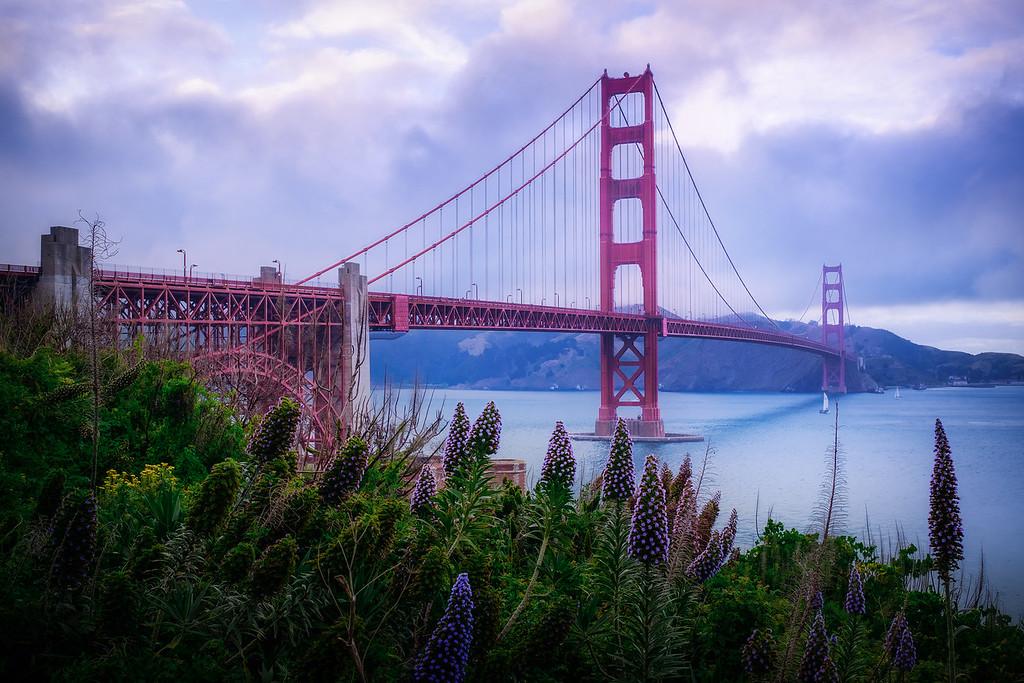 Golden Gate Bridge With Flowers