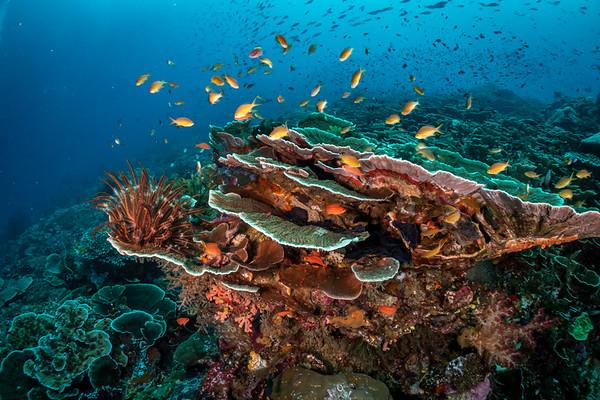 Scenic underwater world