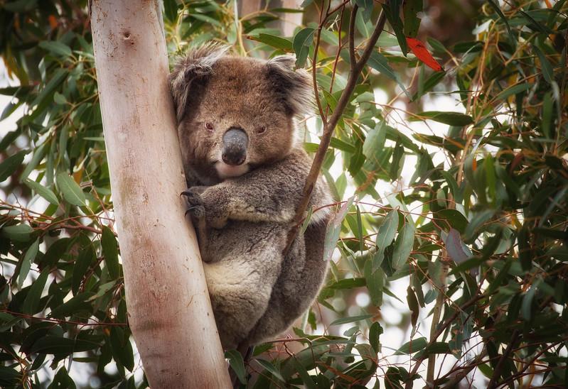 Eucalyptus Hideout