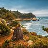 Tree Stub at Point Lobos (California)