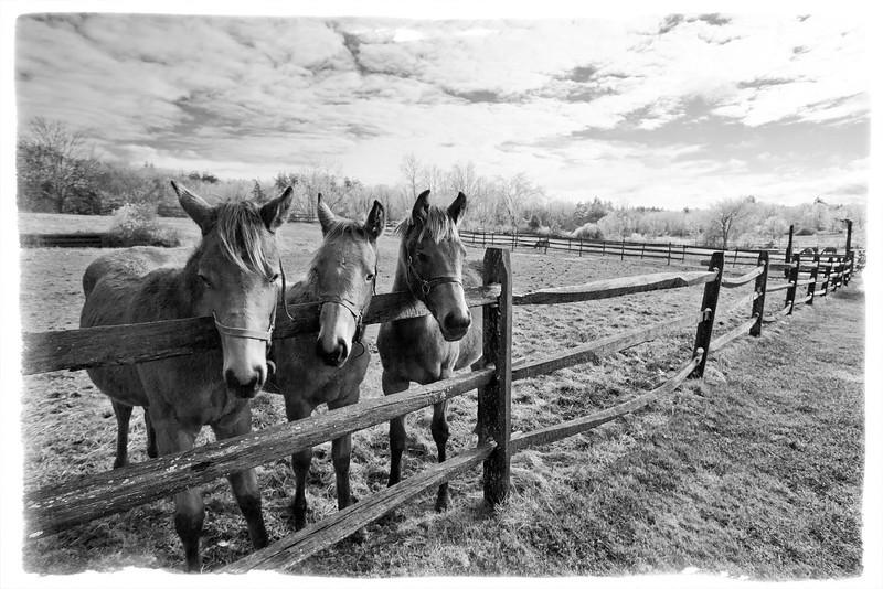 3 Amigos enjoying an Icy Day. Wetherbee Farm, Boxboro, MA.
