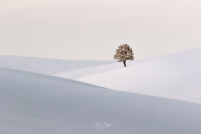 Color of Winter and Charm of Seclusion.