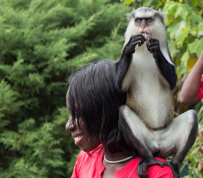 Monah Monkey