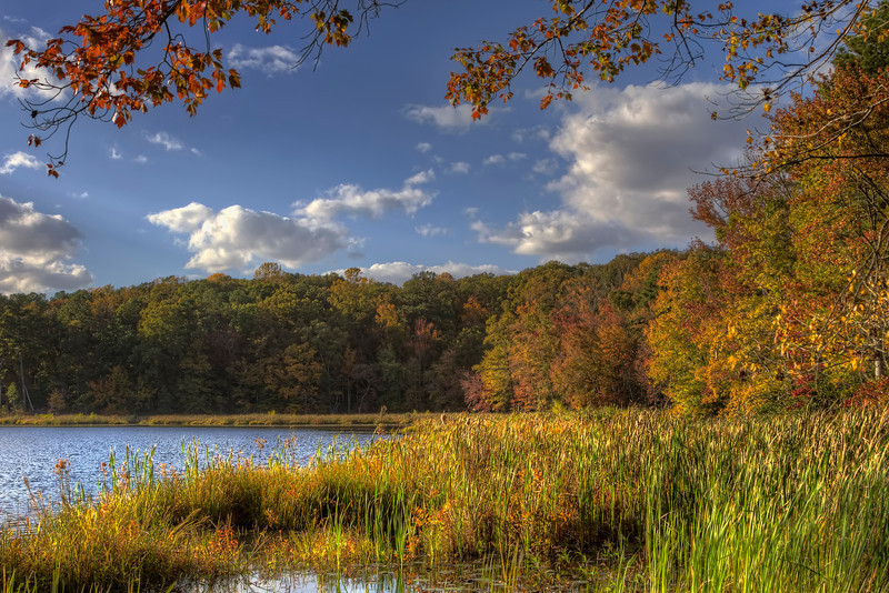 I took this shot while hiking in Pocahontas State Park. The fall colors are really starting to show.