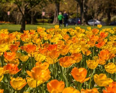 2014-04-24-Sherwood-Gardens-02 copy