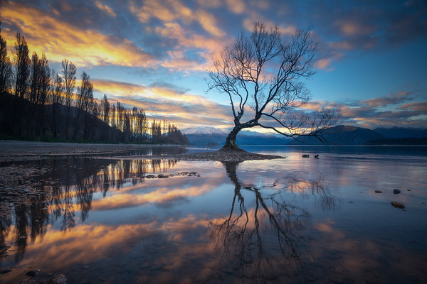 Shining Alone || Wanaka