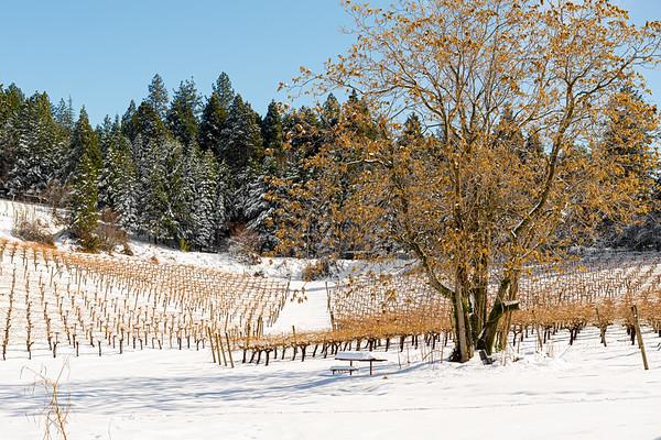 Winter landscape of a snowy vineyard